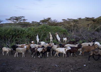 Maasai Volksgruppe